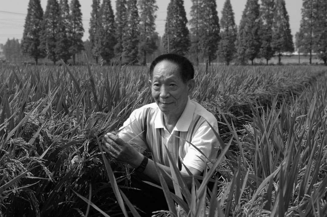 哀悼泪别 接续奋斗——水稻人沉痛追思袁隆平