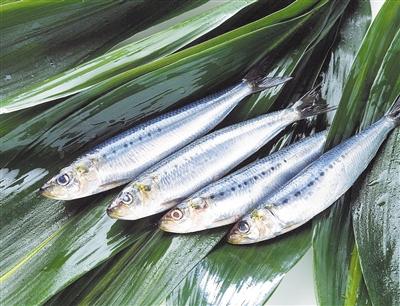 微塑料污染 威胁海洋滤食动物