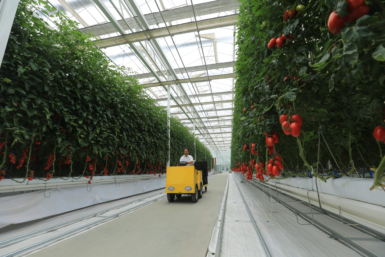 """青岛:智慧农业让农民过上了""""智慧生活"""""""