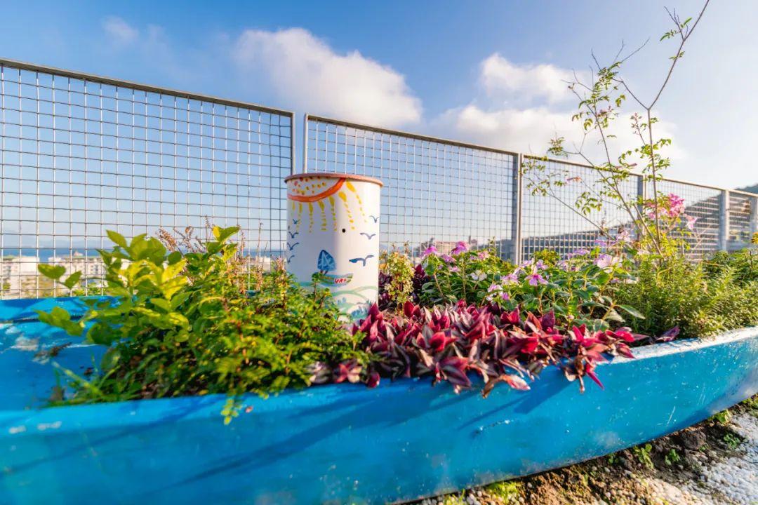 深圳共建社区花园,探索绿色低碳生活方式