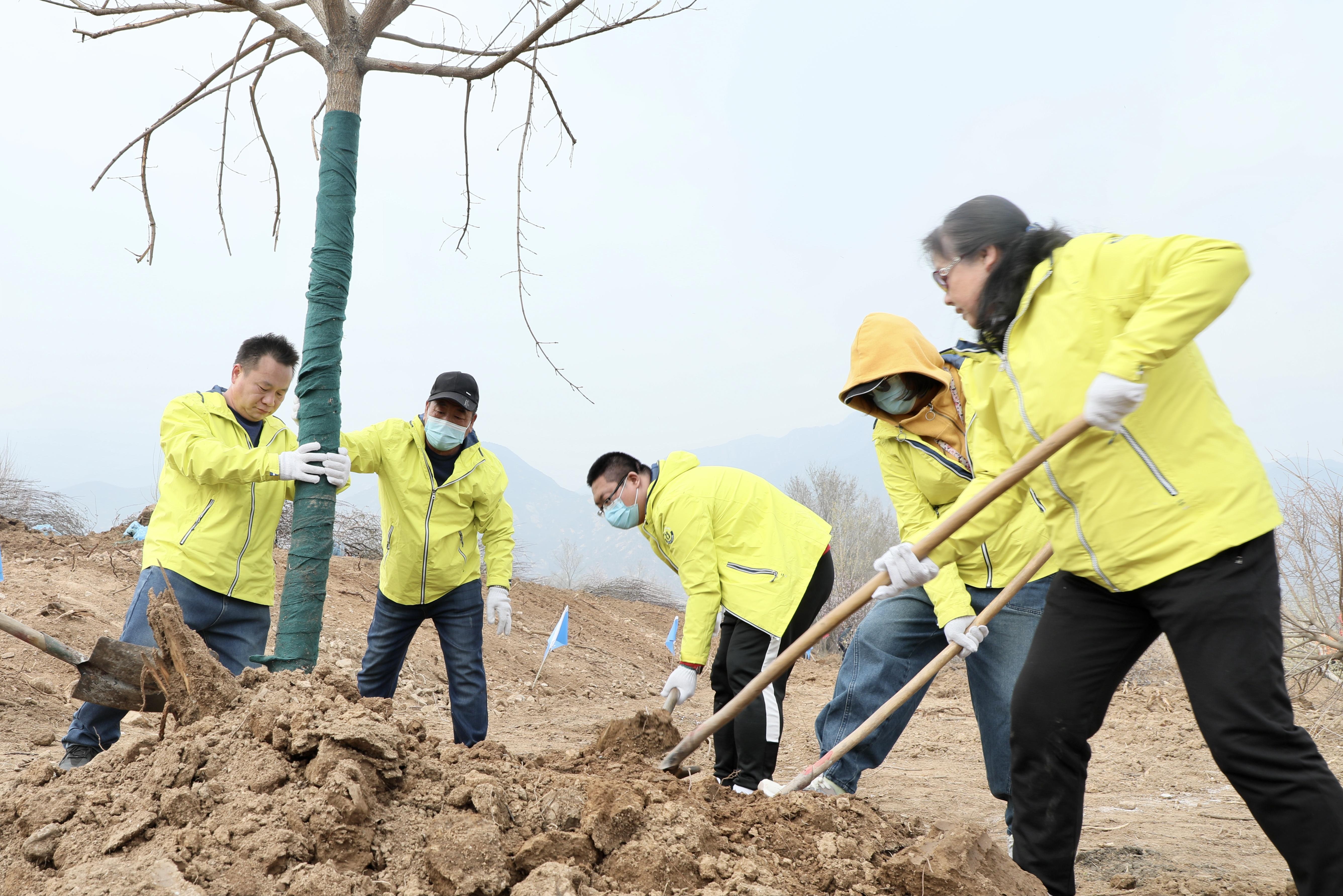 建设最美冬奥城,北京延庆开展第37个首都义务植树日活动