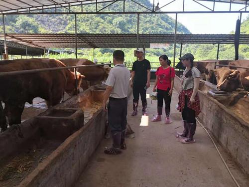 5000名科特派精准服务,广西乡村振兴有了智力保障