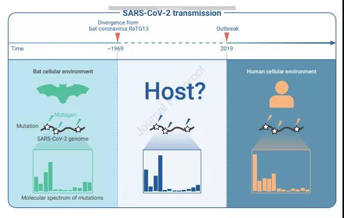 溯源新策略发现新冠病毒起源符合自然进化过程