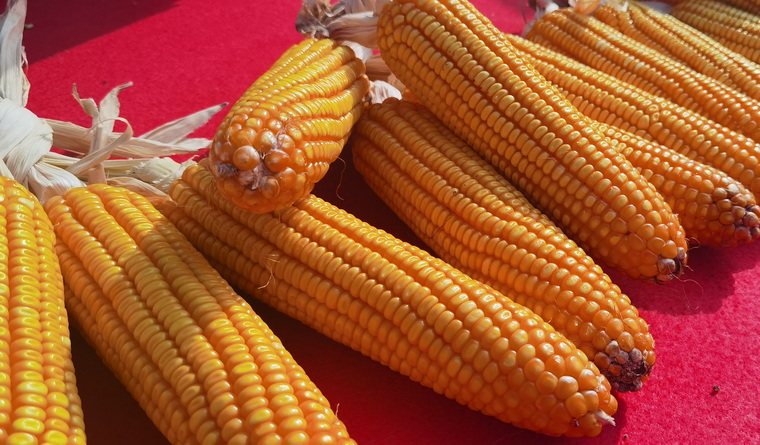 云南省农科院推介农业科技新成果,为实现农业强贡献农科力量
